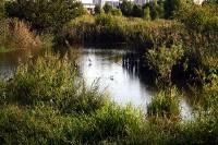 寺尾調節池