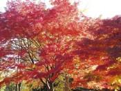 所沢航空公園の紅葉