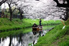 桜を観ながらの「春の舟遊」