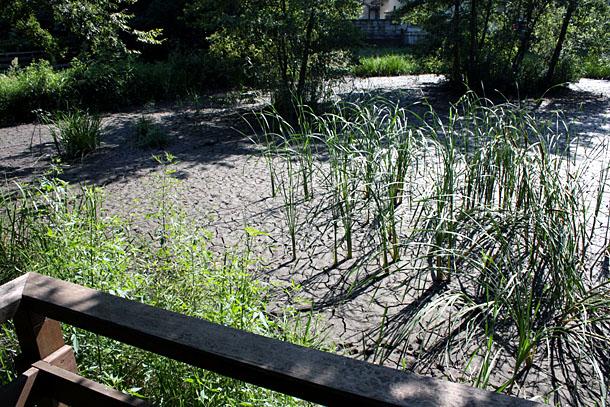 仙波河岸史跡公園「湿性地」