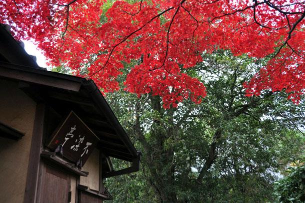 不染亭の紅葉