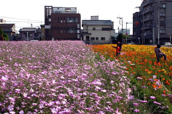 川越駅西口の花畑