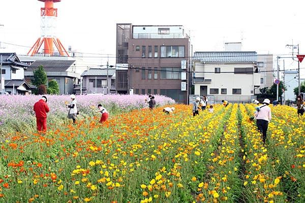 花摘みを楽しむ人たち