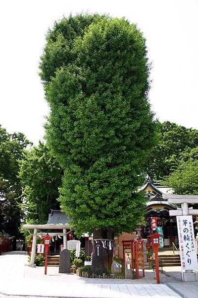 縁むすびの木