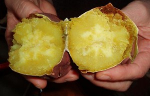 つぼやきの芋